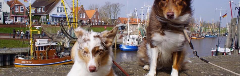 Layla-Sammy-Welpen-Neyla-grüßt-aus-Greetsiel-Nordsee-Beitragsbild.jpg
