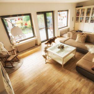 wie wachsen die welpen bei uns auf yellowstone australian shepherds. Black Bedroom Furniture Sets. Home Design Ideas