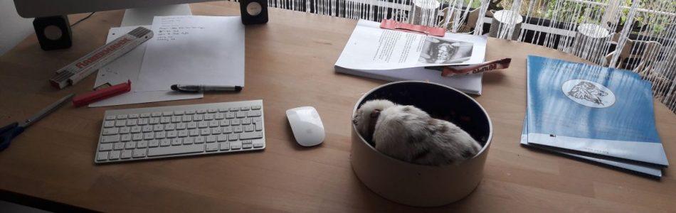 Maisy-Cisco-Welpen-füttern-züchter-like-Beitragsbild.jpg
