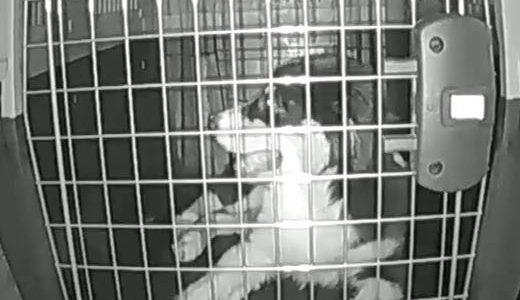 Kamera-Empfehlung-zum-Hund-Überwachen-Zuhause-Beitragsbild.jpg