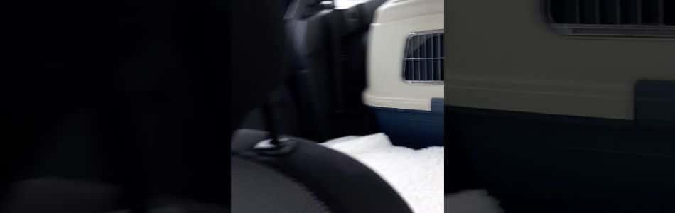Maisy-Horatio-Welpen-Autofahren-Beitragsbild.jpg