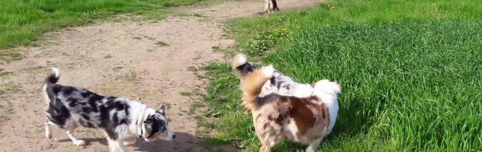 Unsere-Hunde-Rudelspaziergang-Mai-2018-Beitragsbild.jpg