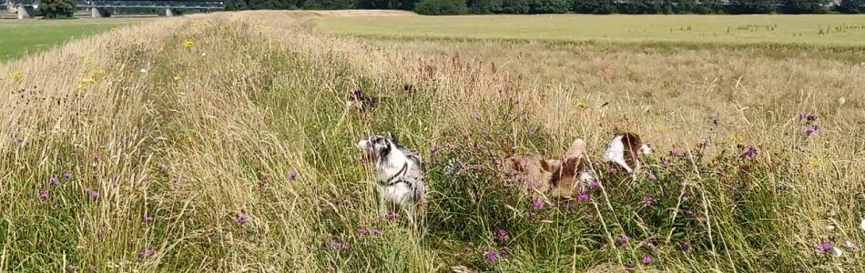 Unsere-Hunde-Schmetterlinginvasion-Beitragsbild.jpg