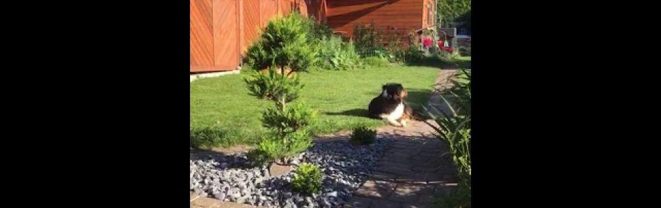 Lulu-Brego-Welpen-Mela-und-der-Rasenmähroboter-Beitragsbild.jpg