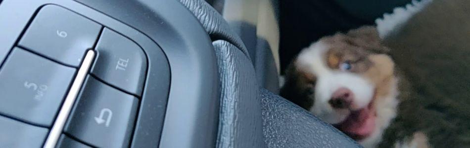 Seven-Horatio-2-Welpen-Nugget-alleine-im-Auto-Hinfahrt-Beitragsbild.jpg
