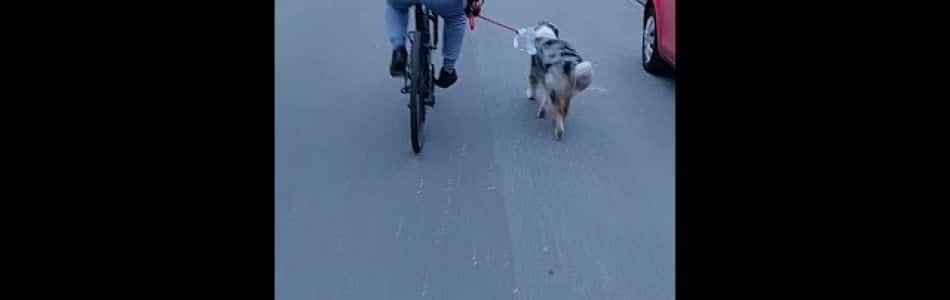 Lulu-Brego-Welpen-Phoebe-mit-Abu-am-Fahrrad-ein-Naturtalent-Beitragsbild.jpg