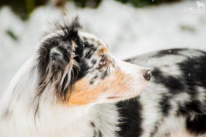 Schnee Januar 2015