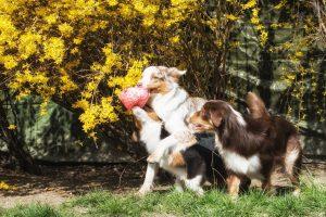 Unsere Hunde Seven Maisy Layla
