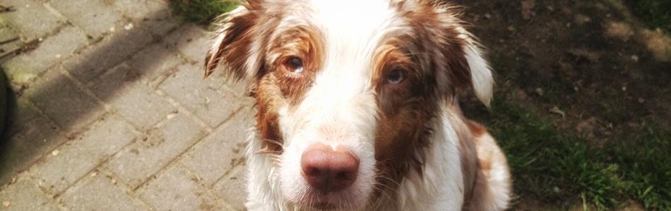 Maisy nass Titelbild