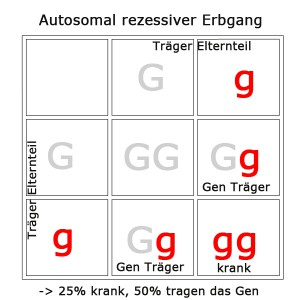 autosomal-rezessiv-2