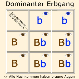 dominanter-erbgang
