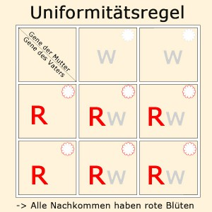 uniformitaetsregel