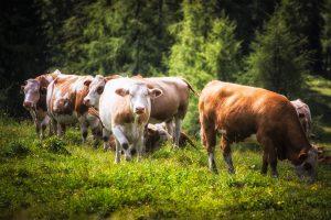 Yellowstone On Tour Österreich August 2014