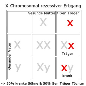 x-chromosomal-rezessiv-1