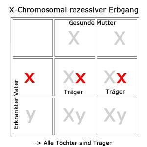 x-chromosomal-rezessiv-2